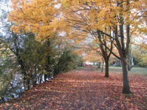 Autumn leaves 2010