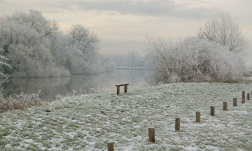Winter in Runnymede Park